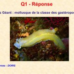 Reponse_Q01